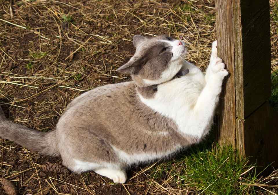 pourquoi mon chat fait-il ses griffes ? | heureux avec mon chat