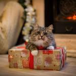 cadeau noel chat