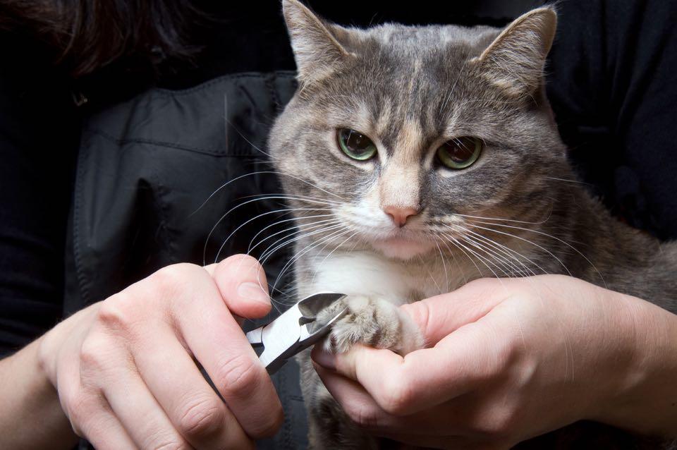 Faut il couper les griffes de son chat heureux avec - Comment couper les griffes de son chat ...